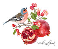 Finch pomegranate card Stock Photography