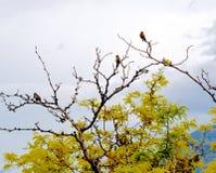 Finch ptaki na gałąź zdjęcia royalty free