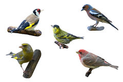 Finches Royalty Free Stock Photo