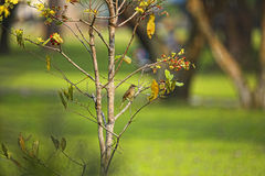 Finches Royalty Free Stock Image