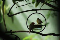 Finches in een Sprookjeslandtuin royalty-vrije stock afbeelding