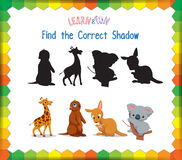 Find the correct Animals shadow.  Stock Images