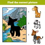 Find the correct picture for children. Okapi and background. Find the correct picture, education game for children. Okapi and background Royalty Free Stock Image