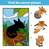 Find the correct picture, game for children. Numbat. Find the correct picture, education game for children. Numbat and background Stock Image