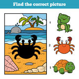 Find the correct picture. Little crab and background. Find the correct picture, education game for children. Little crab and background Stock Photos