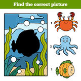 Find the correct picture. Little fish and background Stock Images