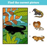Find the correct picture. Xenosaurus and background. Find the correct picture, education game for children. Xenosaurus and background Stock Photography