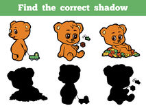 Find the correct shadow (bears) Stock Images