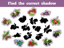 Find the correct shadow (berry and fruits). Find the correct shadow, education game for children (berry and fruits Royalty Free Stock Photos