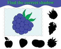 Find the correct shadow of blackberry. Education. Game for children. Vector illustration Royalty Free Stock Image