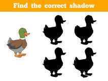 Find the correct shadow (duck). Game for children: Find the correct shadow (duck Royalty Free Stock Image