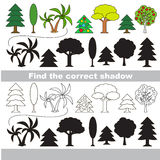 Find correct shadow for each object. Different trees set with shadows to find the correct one. Game to compare and connect objects and true shadows, the Royalty Free Stock Images