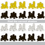Find correct shadow for each object, the kid game. Funny Money - gold coins set to find the correct shadow, the matching educational kid game to compare and Royalty Free Stock Photography