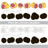 Find correct shadow for each object, the kid game. Grapefruits set to find the correct shadow, the matching educational kid game to compare and connect objects Royalty Free Stock Photo
