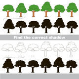 Find correct shadow for each object. Leaf Trees set with shadows to find the correct one. Game to compare and connect objects and their true shadows, the Stock Photo