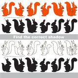 Find correct shadow for each object. Squirrel set with shadows to find the correct one. Game to compare and connect objects and their true shadows Royalty Free Stock Image
