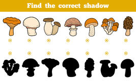 Find the correct shadow, education game about edible mushrooms. Find the correct shadow, education game for children. Set of edible mushrooms Stock Photos