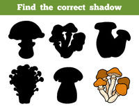 Find the correct shadow, education game about mushrooms. Find the correct shadow, education game for children about mushrooms Stock Image