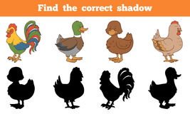 Find the correct shadow: farm animals (chicken and ducks). Game for children: Find the correct shadow: farm animals (chicken and ducks Royalty Free Stock Photos