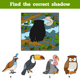 Find the correct shadow. Find bird by shadow. Find the correct shadow, education game for children. Find bird by shadow Stock Photo