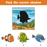 Find the correct shadow. Find fish by shadow Stock Image