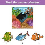 Find the correct shadow. Find fish by shadow Stock Photos