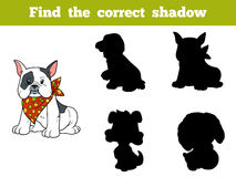 Find the correct shadow (french bulldog). Find the correct shadow, education game for children (french bulldog Royalty Free Stock Photos
