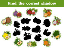 Find the correct shadow (fruits). Find the correct shadow, education game for children (fruits Stock Photos