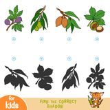 Find the correct shadow, game for children, set of leafs. Find the correct shadow, education game for children, set of leafs Stock Photo