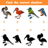 Find the correct shadow, game for children. Vector set of birds. Find the correct shadow, education game for children. Vector set of birds Stock Photos