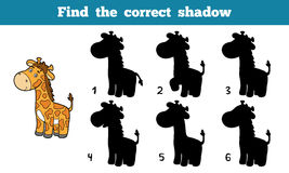 Find the correct shadow (giraffe) Royalty Free Stock Images