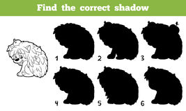 Find the correct shadow (hedgehog). Game for children: Find the correct shadow (hedgehog Stock Image