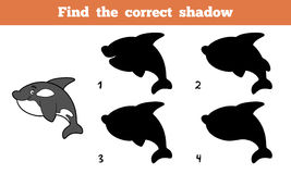Find the correct shadow (killer whale) Royalty Free Stock Images
