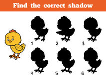 Find the correct shadow. Little chick. Find the correct shadow, education game for children. Little chick Stock Images