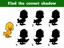 Find the correct shadow. Little duck. Find the correct shadow, education game for children. Little duck Royalty Free Stock Photo
