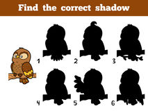 Find the correct shadow. Little owl. Find the correct shadow, education game for children. Little owl Stock Photo