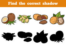 Find the correct shadow: nuts. Find the correct shadow, education game for children (nuts Stock Images