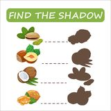 Find the correct shadow nuts. Find the right shade nuts. Set to find the right shadow matching educational baby game to compare and connect objects and their Stock Image