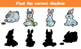 Find the correct shadow (rabbit) Royalty Free Stock Photo