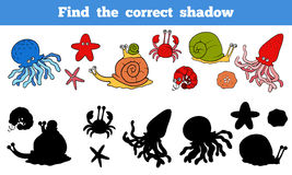 Find the correct shadow (sea life, fish, octopus, snail, stars,. Game for children: Find the correct shadow (sea life, fish, octopus, snail, stars, crab Royalty Free Stock Images
