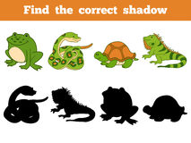 Find the correct shadow (snake, turtle, iguana, frog). Find the correct shadow, education game for children (snake, turtle, iguana, frog Royalty Free Stock Photography