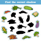 Find the correct shadow. Thai Vegetables. Find the correct shadow, education game for children. Thai Vegetables Royalty Free Stock Image