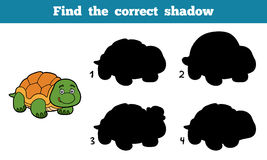 Find the correct shadow (turtle). Find the correct shadow, education game for children (turtle Stock Photography
