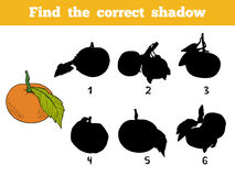Find the correct shadow. Vector color set of orange fruits. Find the correct shadow, education game for children. Vector color set of orange fruits, mandarin Stock Photography