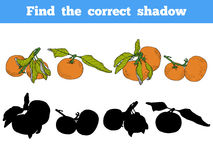 Find the correct shadow. Vector color set of orange fruits. Find the correct shadow, education game for children. Vector color set of orange fruits, mandarin Royalty Free Stock Photo