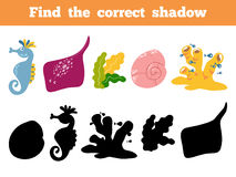 Find the correct shadow. Vector color set of sea life. Find the correct shadow, education game for children. Vector color set of sea life, sea horse, shell, crab Stock Image