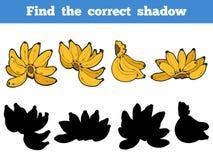 Find the correct shadow, vector set of banana Royalty Free Stock Photos