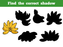 Find the correct shadow, vector set of banana Stock Images