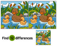 Find differences (duck) Stock Photos