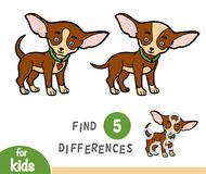 Find differences, education game, Chihuahua. Find differences education game for children, Chihuahua Royalty Free Stock Photography